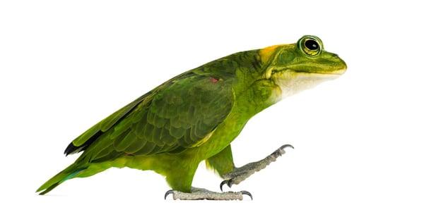 frog-bird-hybrid-animal