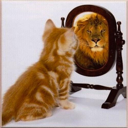 Cat-sees-lion-mirror-500x500.jpg