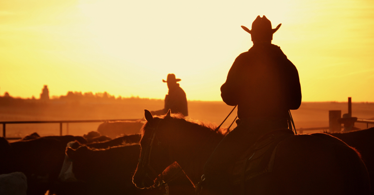 cattle_round_up_1200x627